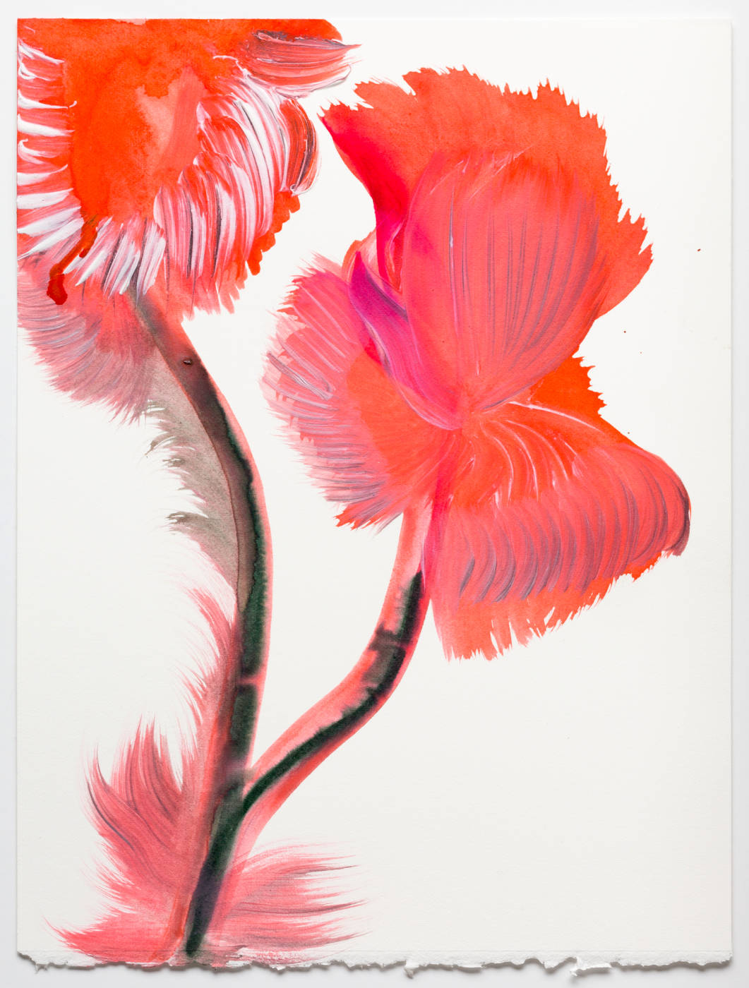 Coral Pink Flower 1
