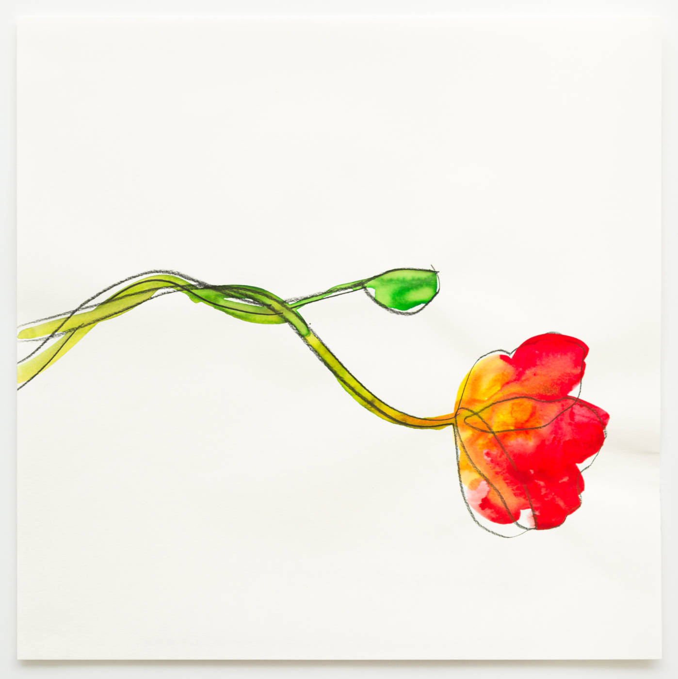 Mapplethorpe's Flowers IV