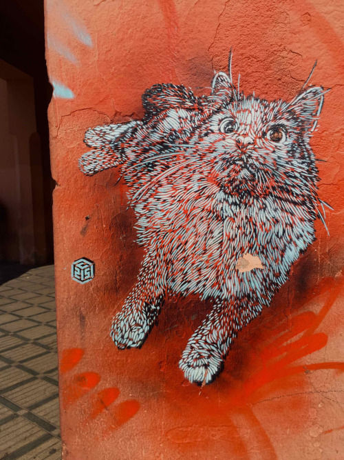 Œuvre Par C215 à Marrakech, Marrakech-Safi
