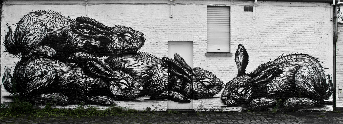 Artwork By Roa in Ghent (Nature, Wall, Street Art)