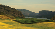 Okanagan Wine Region