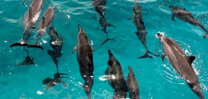 Dolphin Star Wild Dolphin Watch BBQ & Snorkel Tour