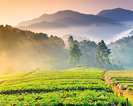 THAILAND EXPRESS<br>5-Day Tour<br>On The Go Tours<br><br>$988*