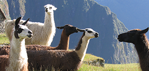 Save 15%* on select<br>South America tours with G Adventures<br><br> Expires April 30, 2019