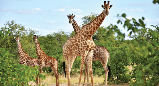 SPECTACULAR SOUTH AFRICA<br>12-day tour from $3449*