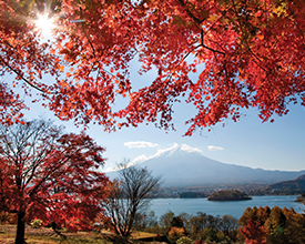 LAND OF THE SAMURAI<br>12-Day Tour<br>On The Go Tours<br><br>$7221*