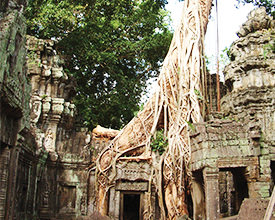 SAIGON TO SIEM REAP<br>9-Day Tour<br>On The Go Tours<br><br>$1866*