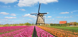 Windmills, Volendam and Marken Tour
