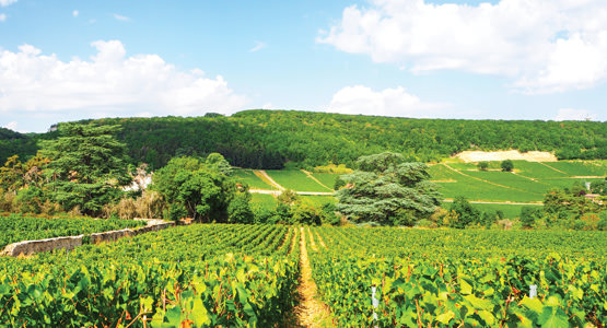 BURGUNDY RIVER CRUISE<br>8-day tour from $3144*
