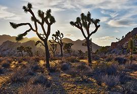 Palm Springs & Deserts