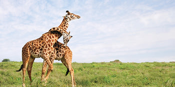 Save up to 50%* <br>on select Africa & Asia tours<br>with On the Go<br><br> Expires October 31, 2019