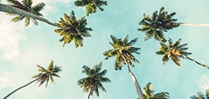 Receive employee pricing*<br>on select sun holidays <br>with Air Canada Vacations<br><br>Expires January 27, 2019