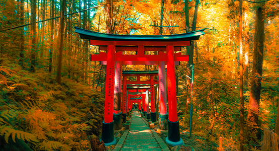 SPLENDOURS OF JAPAN<br>9-day tour from $5296*