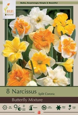 Butterfly Narcissus Mix