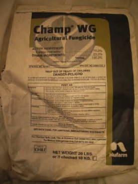 Champ WG