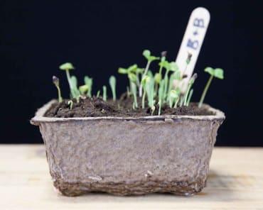 Kord® Fiber Grow Garden Paks