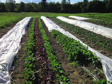 Agribon+™ AG-19 Row Cover