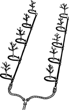 Orchard Crop Irrigation Starter Kit