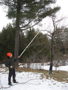 Silky Hayauchi Pole Saw