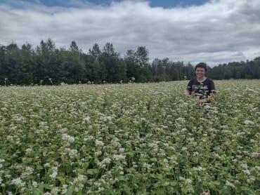 Buckwheat, Common