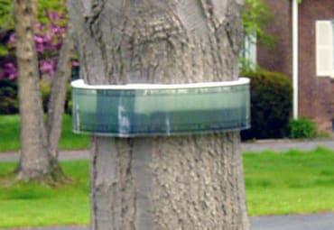 BugBarrier Tree Bands