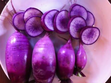 Mini Purple