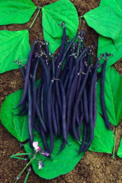 Velour Purple Filet