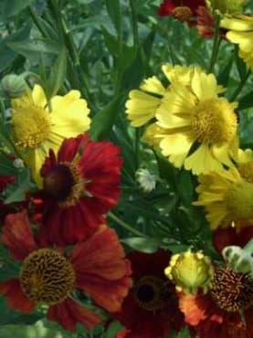 Helen's Flower Mix