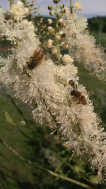 Bee and Butterfly Pollinators Collection