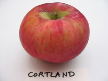 Duchess of Oldenburg