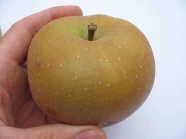 Winthrop Greening