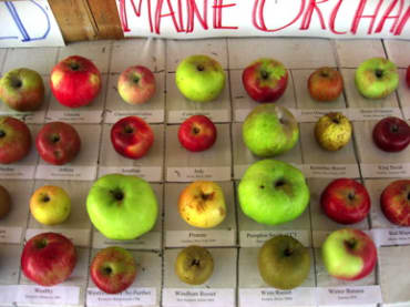Heirloom Apple Collection