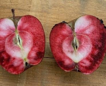 Ellis Bitter