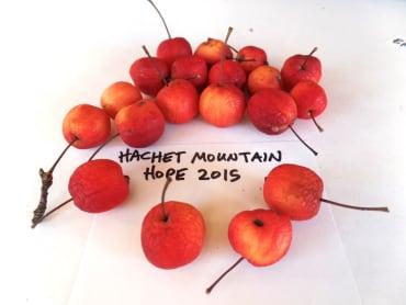 Hard Cider Apple Collection