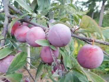 Waneta
