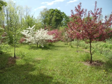 Crabapple Collection