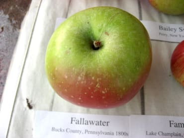 Fallawater