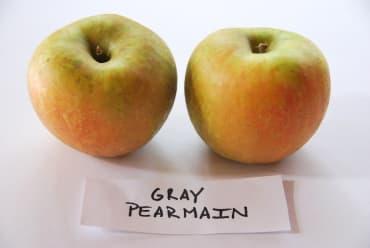 Gray Pearmain