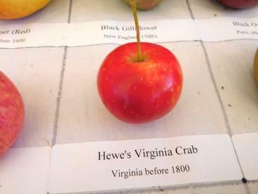 Hewe's Virginia Crab