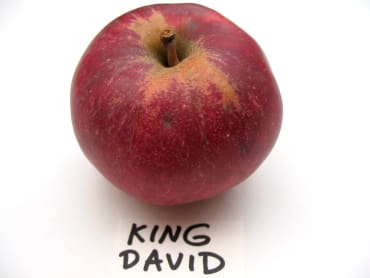 Kingston Black
