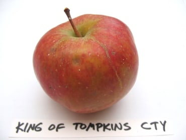 King of Tompkins County