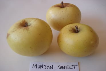 Munson Sweet