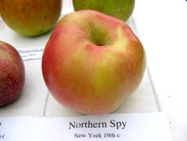 Mutsu