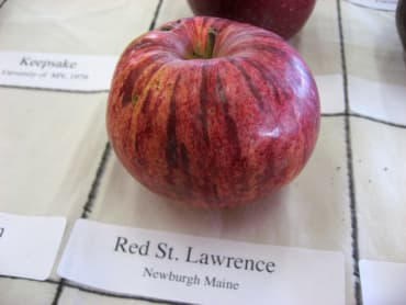 Red St. Lawrence