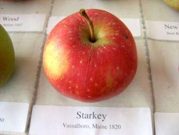 Spice Sweet