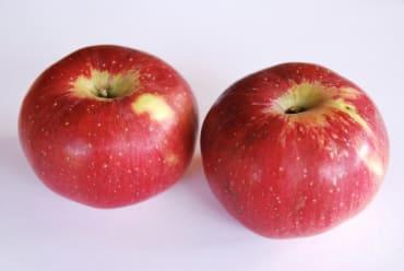 Williams Pride