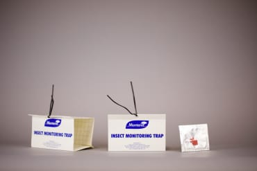 Codling Moth Trap & Lure