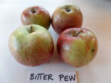 Bitter Pew