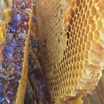 Anti-Ageing Properties of Honey
