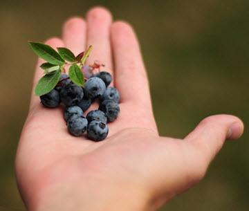 Blueberry in hand